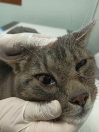 Forlì, gatto ferito da arma da fuoco