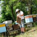 L'alleanza necessaria per salvare le api e la biodiversità