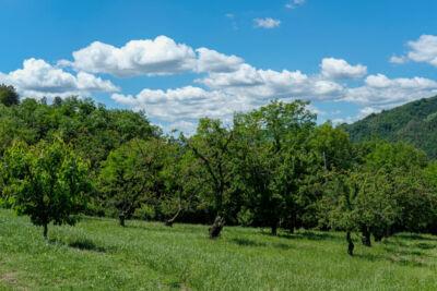 """Tutto il sapore delle ciliegie """"di montagna"""" a Civitella"""