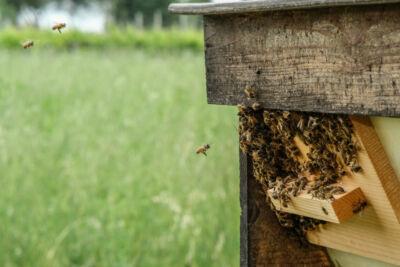 Libere api in liberi prati biodiversi, miele in favo di Fatevobees