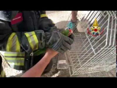 Pappagallo recuperato dai vigili del fuoco a Fontanelice