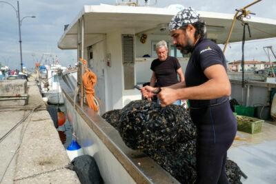 Si raccoglie la cozza di Marina di Ravenna, dal 25 la festa