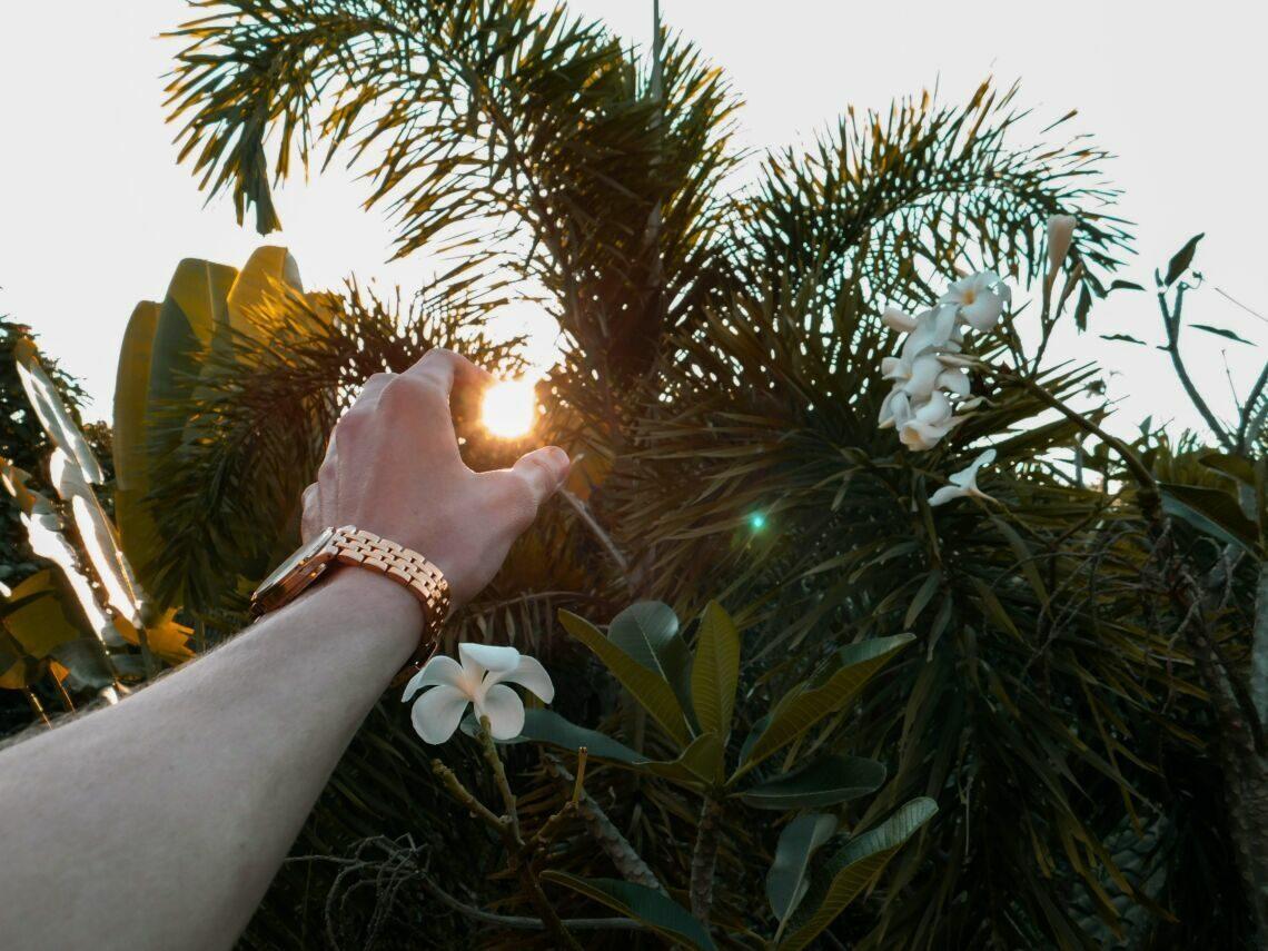person wearing gold wristwatch near bush