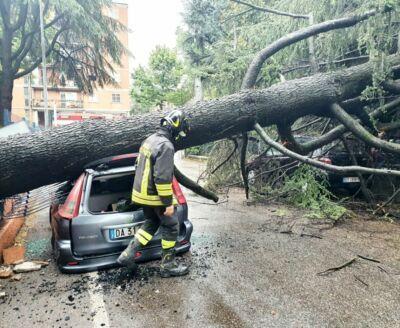 Rimini, maltempo: crollano gli alberi, tre auto distrutte