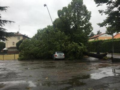 Imola, crolla albero su auto in sosta