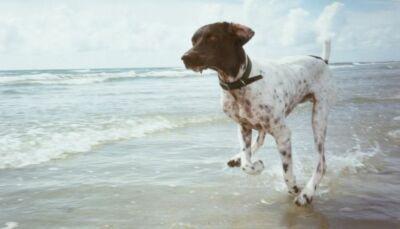 Ravenna: fuma e porta il cane in spiaggia, multe da 600 euro