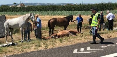 Cavallo morto in un incidente in A14 a Cesena