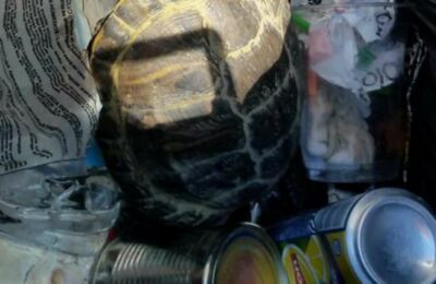 Tartaruga gettata tra i rifiuti: salvata a Bellaria da un passante