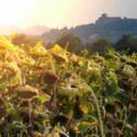 Riscaldamento globale: la zona di Cesena è tra le meno colpite