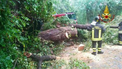 Tempesta di vento e grandine su Castel San Pietro, alberi caduti