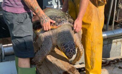 Peschereccio di Cesenatico recupera una grande tartaruga marina