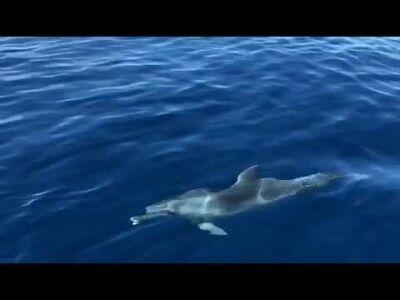 Rimini, splendido spettacolo dei delfini