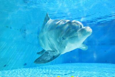 Veera, la delfina che arriva dalla Scandinavia VIDEO E FOTO