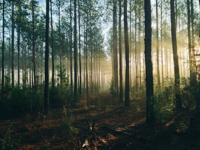 photography of tall trees at daytime