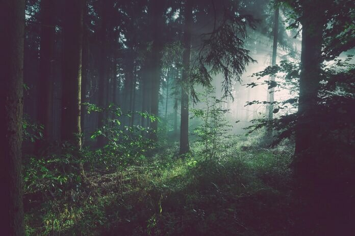 trees on forest with sun rays
